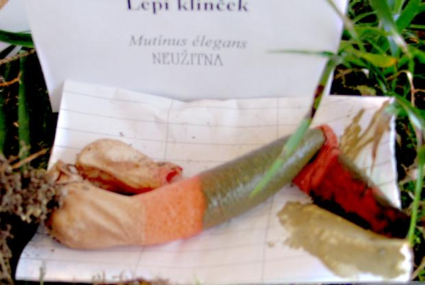 lepi_klincek_1